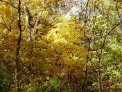 Weston Bend State Park