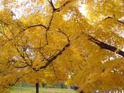fall oct 24 2009 043.jpg