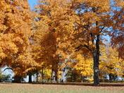 Fall trees near Spring Hill