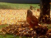 Lillie in Leaves
