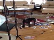 Dog Attacks Oprah Magazine