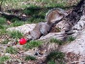 Easter Egg Hunt Help