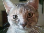 Coley Cat