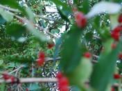 Miles of Berries