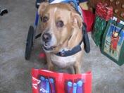 Dinkey's gift 1
