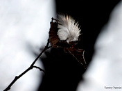 Feather in the tree