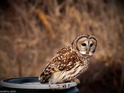 Hoot Owl lookout