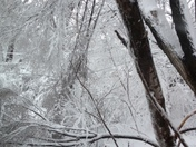 Trees Taking Down Power Line