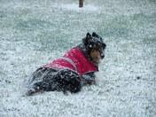 My dog enjoying the snowstorm 3/28