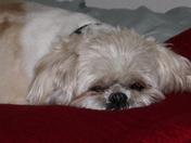 Mocha's dozing off...