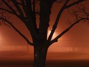 Fog Frontier park Olathe