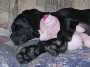 Molly sleeping