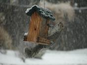 Bird feed eating Squirrel!