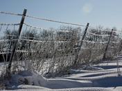 Farmer's Frozen Fence