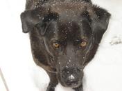 Pepper Ann in the snow