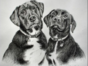 Pet Portraits by Claudia