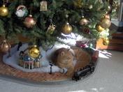 Charlie - Christmas 2008