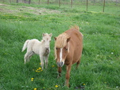 Sandy's new foal