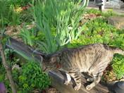 Garden Guard Cat