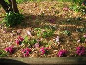 The Jennifer Garden