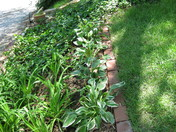 Day Lilly's and Hosta's