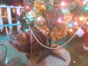 Cats' Christmas