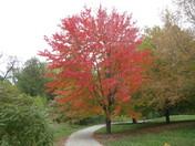 Fall Foliage - Antioch Park