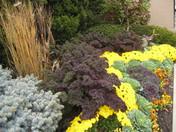 Fall Foliage - The Plaza