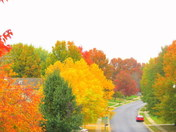 fall on 39th st in blue springs
