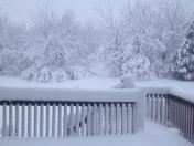 Good Morning from my deck by Carri Banes