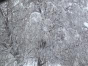 So pretty covered in snow!