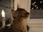 Leila's first Christmas