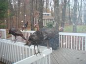 We Got Turkeys!