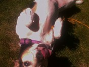 Jazzie being very cute