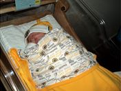 BORN TO BE A BRUINS FAN!
