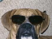 cool boxer