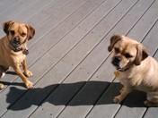Benjimen and Sophie