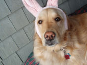 Happy Easter from Murphy Brown