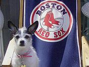 Annie loves our hometown team!