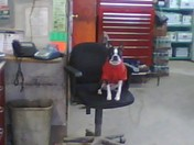 Bruschi's the Boss in the Big Chair