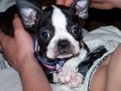 Bruschi's First Day Home