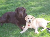 Remington & Tucker relaxing in the shade