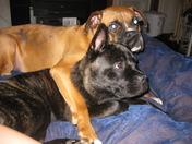 Maxi and Rescue