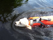 Hoss trying out his new life jacket