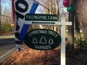 Pacing Pine Farm, cut your own and pre cut Christmas trees. www.pacingpinefarm.c