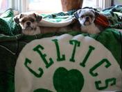 watching the celtics