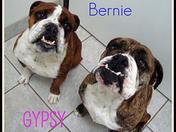 BERNIE & GYSPY.jpg