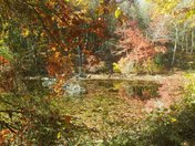 Hillside Pond