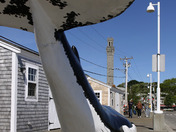 P-Town Whale Tail