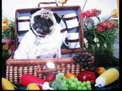 Pug Fruit